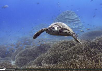 Turtle Foundation