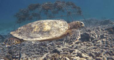 Seychellen Ocean-Commitment